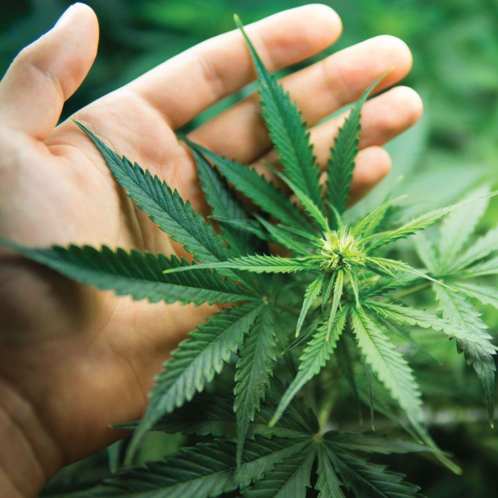 location for your marijuana dispensary