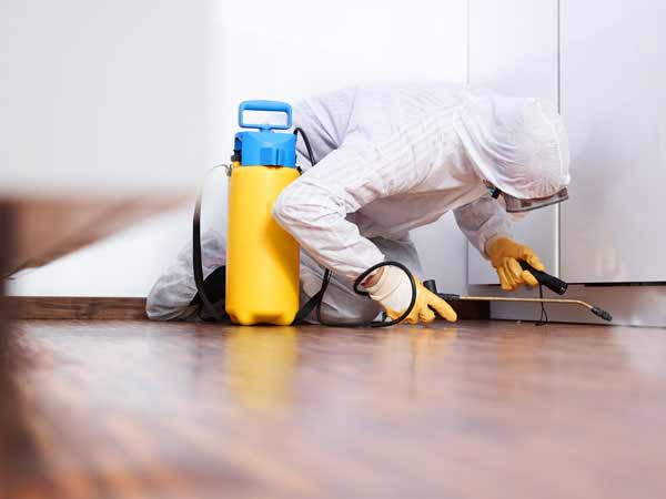 professional company for home improvement